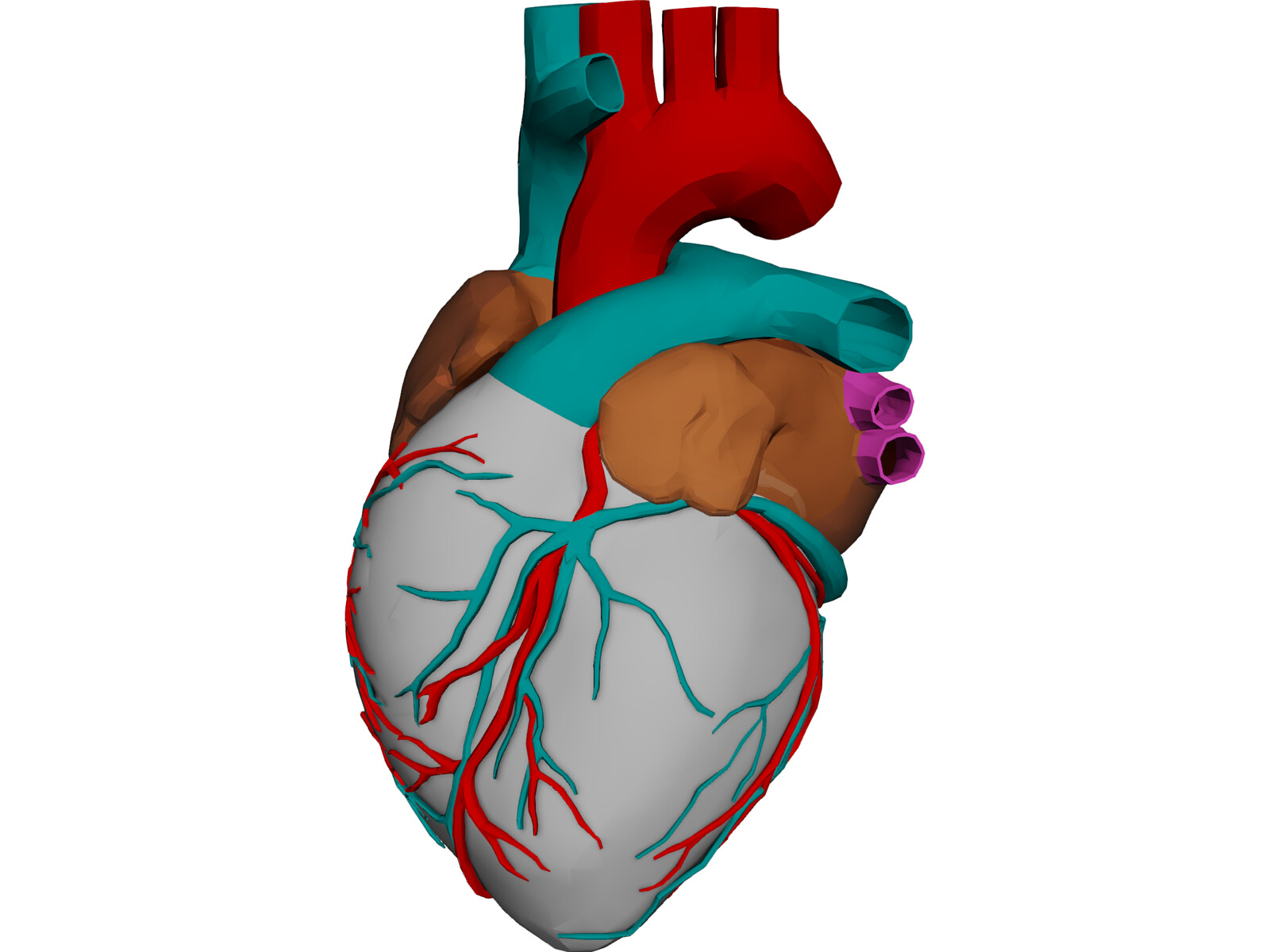 Heart with Internal Parts 3D Model - 3D CAD Browser