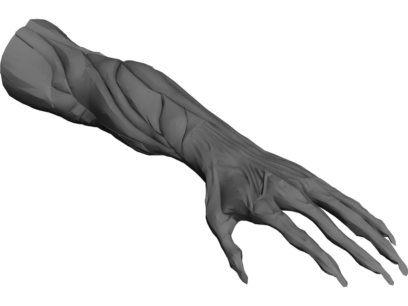 arm muscles 3d model download - 3d cad browser, Muscles