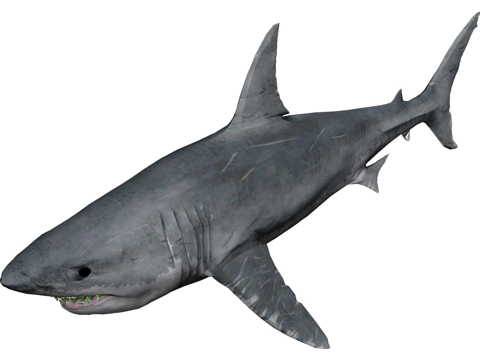 Shark Model Pictures to Pin on Pinterest - ThePinsta
