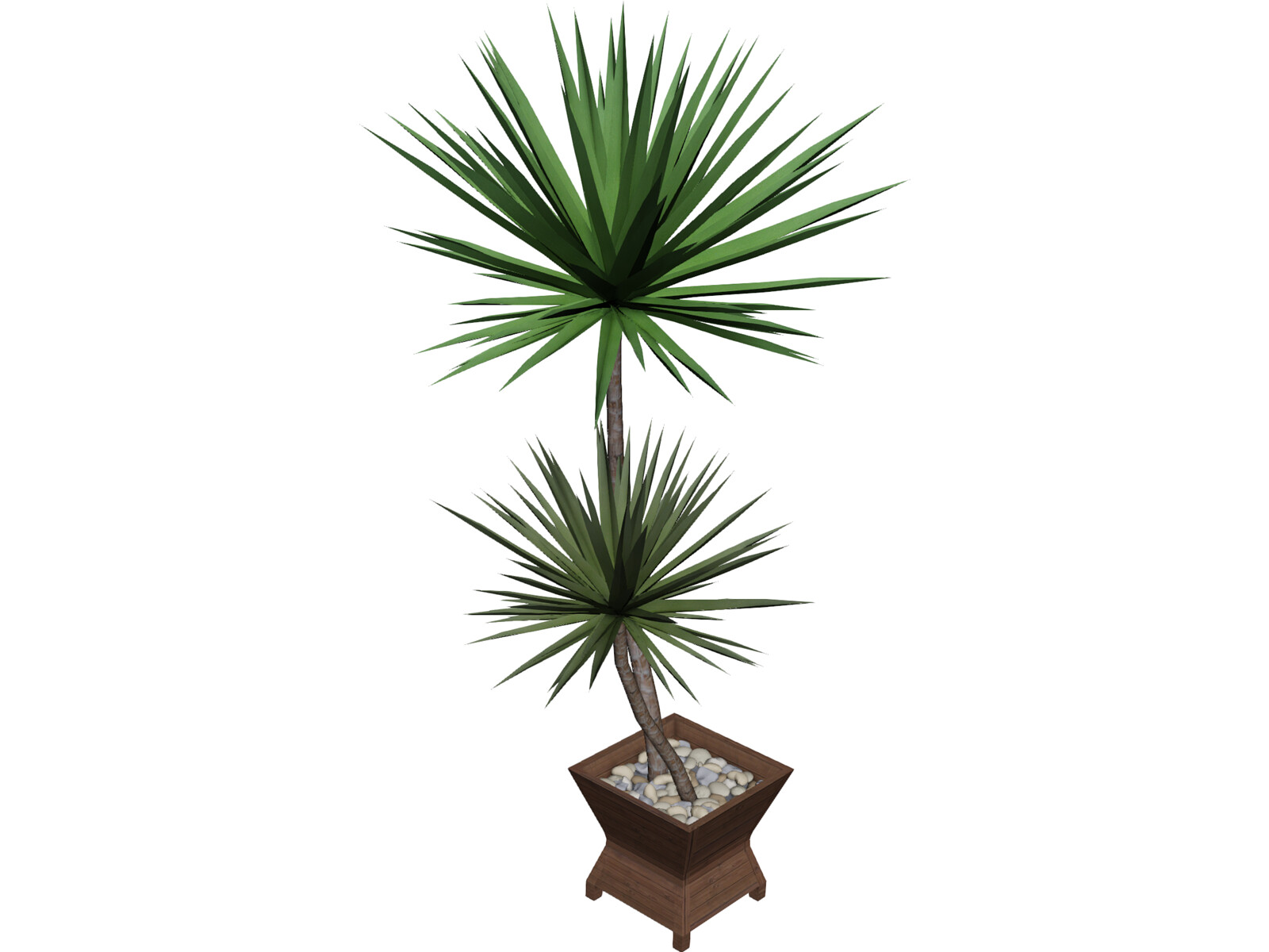 Yucca Plant Drawing Yucca Plant 3d Model