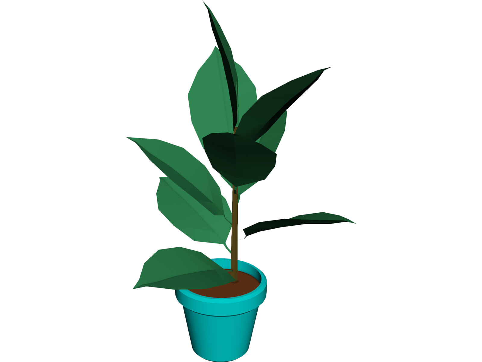 India-Rubber Plant