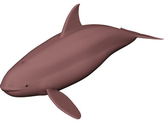 Whale Killer Female 3D Model