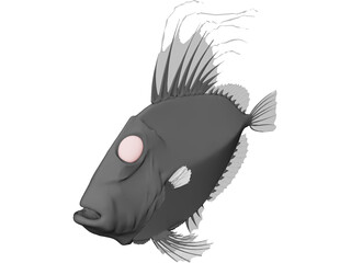 San Peters Fish 3D Model