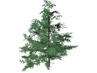 False Golden Larch 3D Model