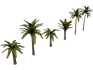 Palm Collection 3D Model