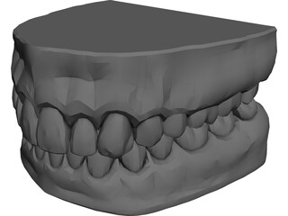 Teeth and Gums 3D Model