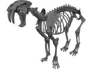Tiger Saber Tooth Skeleton 3D Model