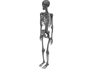 Skeleton 3D Model 3D Preview