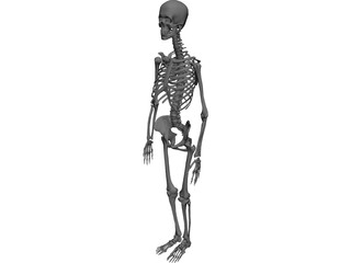 Skeleton Female 3D Model