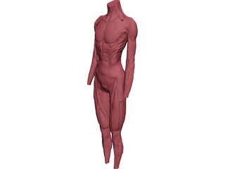 Surface Muscles 3D Model