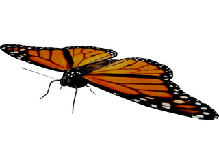 Butterfly 3D Model 3D Preview