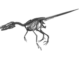 Velociraptor Skeleton 3D Model