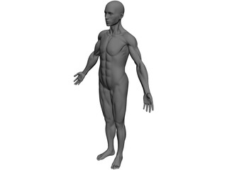 Full Human Anatomy for Simulation 3D Model