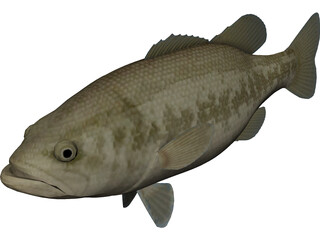 Florida Largemouth Bass 3D Model