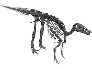 Edmontosaurus Skeleton 3D Model