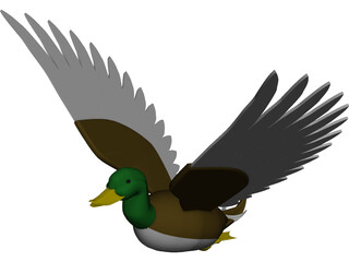 Duck Flying 3D Model