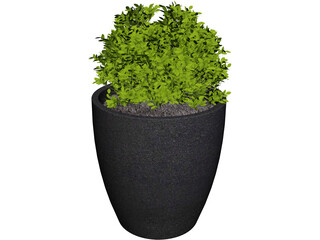 Boxwood Plant 3D Model