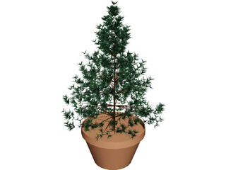 Potted Pine Tree 3D Model