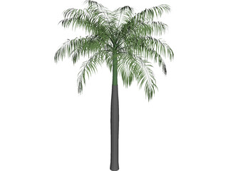 Palm Tree (Royal Palm) 3D Model