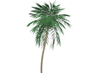 Palm Tree Tall 3D Model