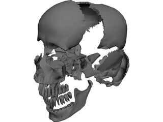 Skull Articulated 3D Model
