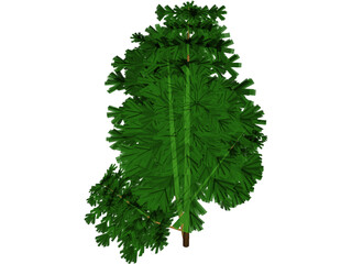 Juniper Bush 3D Model 3D Preview