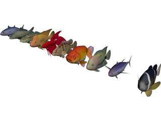 Fish Collection 3D Model