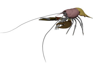 Lobster (Homarus Gammarus) 3D Model