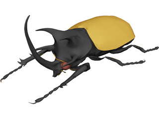 Eupatorus Gracilicornis 3D Model