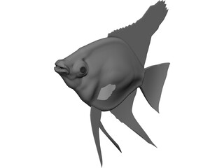 Pterophyum Scalare 3D Model