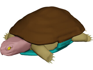 Turtle (Terrapene Ornata) 3D Model