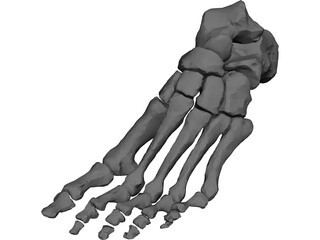 Foot Bone Left 3D Model