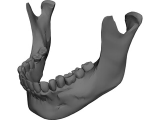Jaw Lower 3D Model