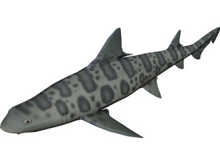 Leopard Shark 3D Model 3D Preview