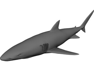 Blue Shark 3D Model 3D Preview