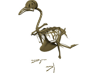 Pigeon Skeleton 3D Model