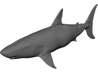 White Shark 3D Model 3D Preview