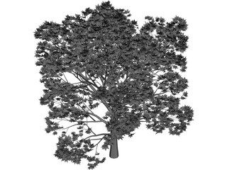 Oak Tree 3D Model 3D Preview
