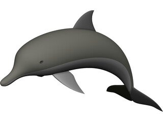 Dolphin 3D Model 3D Preview