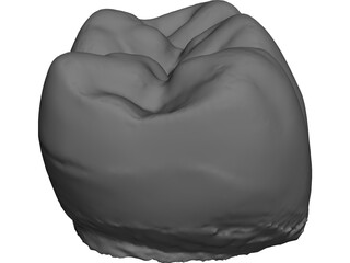 Molar Tooth 3D Model