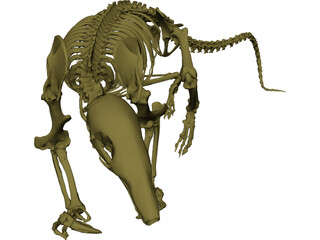 Skeleton Prehistoric 3D Model