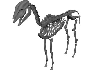 Horse Skeleton 3D Model 3D Preview