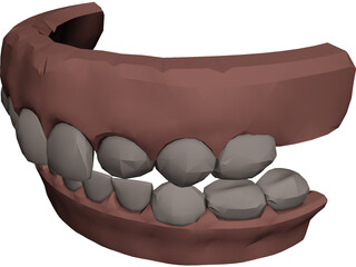 Jaw and Teeth 3D Model