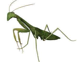 Mantis Praying 3D Model