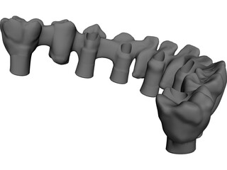 Reduced Mandibula Arcade 3D Model