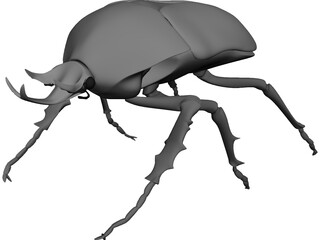 African Rose Beetle 3D Model