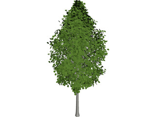 Quaking Aspen (Populus Tremuloides) 3D Model