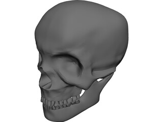 Skull Complete with Jaw Bone and Teeth 3D Model