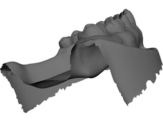 Teeth 3D Scanned 3D Model