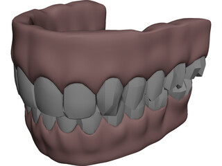Gums Teeth Tongue 3D Model